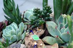 a succulent patch with miniatures