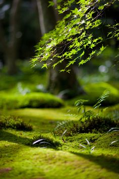 Mossy garden, Kyoto