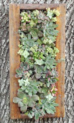 succul wreath, vertic wall, succul garden, succul vertic, vertic garden, vertical wall garden, succul design, succulent vertical, wall gardens