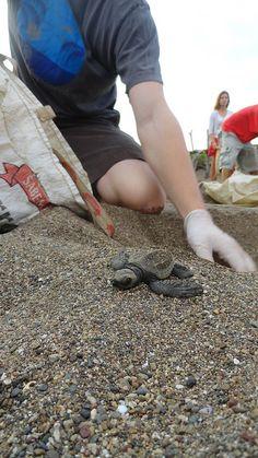 https://www.abroaderview.org Volunteer Costa Rica Sea Turtles Conservation Program