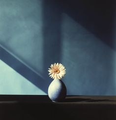 robert mapplethorpe, african daisy 1982.