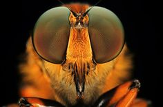 Magnificent Macro Photos of Insect Eyes by Shikhei Goh