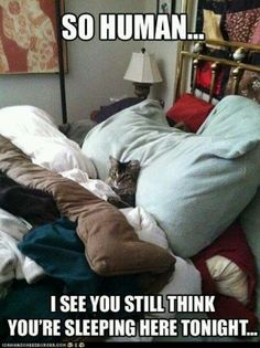 Looks just like my cat. Hogs the entire bed and I wake up right on the edge!!