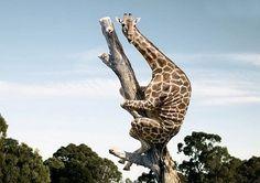 cat, funny pics, tree, giraff, funny women, joke, spider, baby animals, monkey