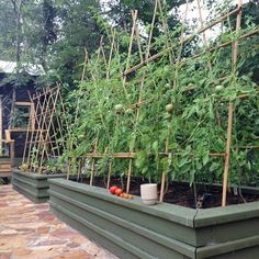 garden beds with trellises. Erika Powell