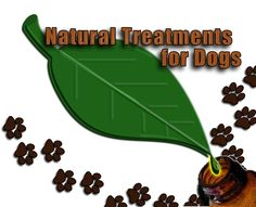 How to Treat Your Dog's Upset Stomach Naturally