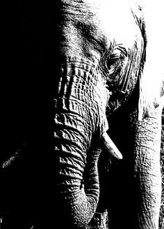 An Elephant Never Forgets$20.00