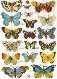 Mariposas - Butterflies