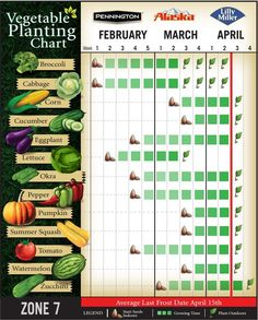 Vegetable Planting Chart for Zone 7 || Here is what my planting chart looks like in my zone. Check out the link to see when you can plant in your area! #gardening #spring #winter