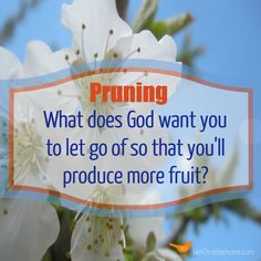 Pruning:  What does