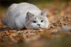 Adorable Kitties By Sandra Schurmans