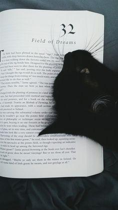 Cat got your book?