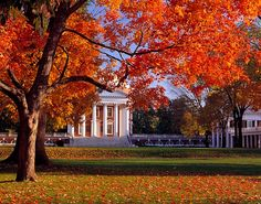 lawns, schools, autumn, law school, places, football season, homes, colleg, university of virginia