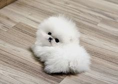 Cute miniature dog