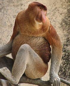 Weird Animals | weird_animals_07.jpg