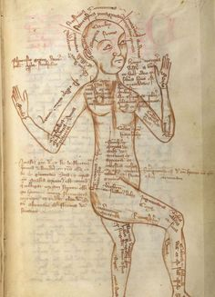 This 15th century medical text from Germany shows a man with various parts of the body described.