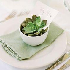 Place Card Inspirations - Succulent