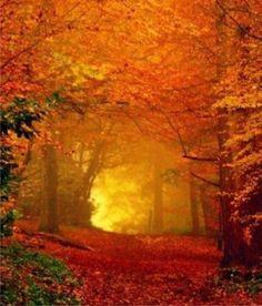 Fall tree tunnel