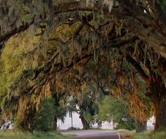 Road Trip??? America's Most Iconic Drives: Bayou Cruise, Louisiana