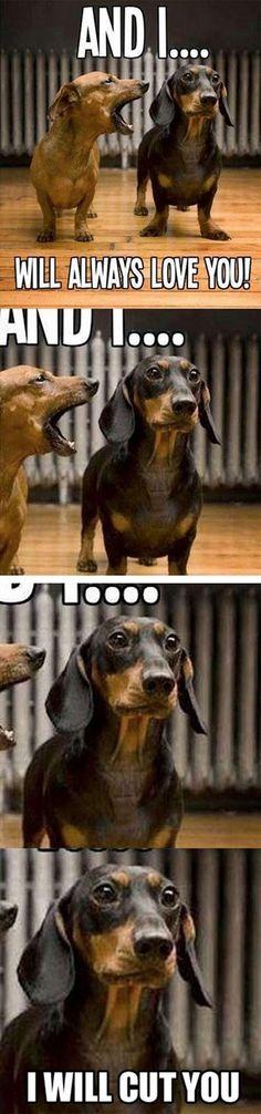 weiner dog laughs