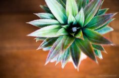 A succulent ring pillow? | Green Wedding Idea: A Tahiti Destination Wedding In Moorea (French Polynesia) | Green Bride Guide