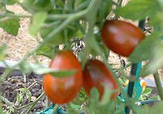 Tips for Central Texas gardening