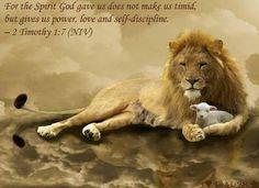 Lion  the Lamb