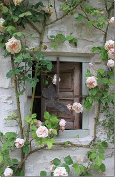 Delicate pink roses at the window - what a gorgeous view!