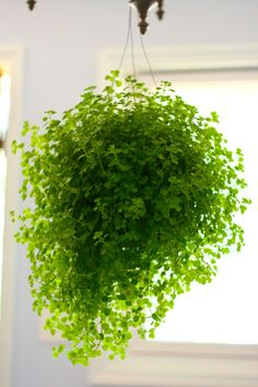 i love this plant