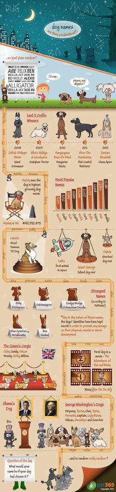 pet infographic, dogs, dog infograph, anim fact, dog fact, names, doggi, puppi, pet fact