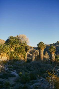 massage california joshua tree