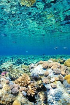 Scuba Dive in the Great Barrier Reef. CHECK ✓