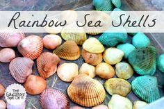 Creating Rainbow Sea Shells from The Educators' Spin On It