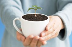 Use your coffee grounds as plant fertilizer!   #coffee #fertilize #plants
