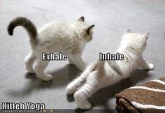Exhale, Inhale...kitteh yoga