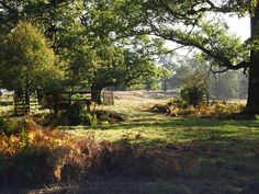 Can you spot the stag? Gabriele Neher did at Calke Abbey on 19 October