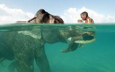 Elephant Ride, Indonesia
