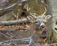 Deer Hunting Tips: Deer Hunting Tips
