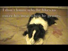 Using Capturing to train dog tricks...