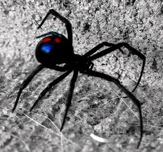 Killing Spiders Without Pesticide. Lemon Fresh