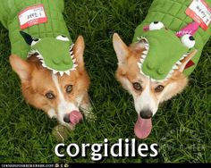 I think people dress Corgis more than other dogs.