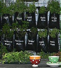 Window gardening on pinterest herb wall mason jar herbs and herbs - Outdoor tuinieren ...