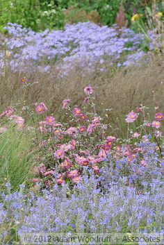 Pensthorpe Nature Reserve - 138, via Flickr.