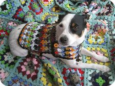 Dog Sweater (Crafting 365, day 150) by Just Be Happy Crochet, via Flickr