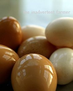 The most beautiful chicken eggs ever!