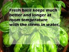 How to help your fresh basil last longer.