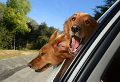 This is totally amazing! Road Trip with dogs
