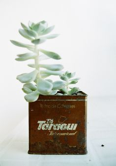 Taragüí by meriepi, via Flickr