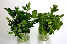 How to Store Parsley, Cilantro, and Other Fresh Herbs on Simply Recipes