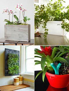 Indoor plants.